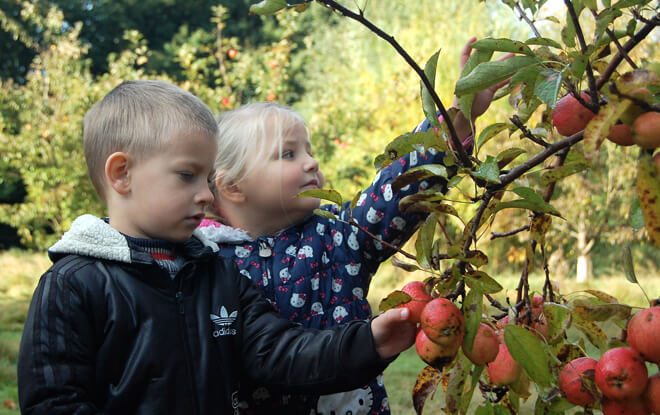 learning-outside-the-classroom-apple-picking