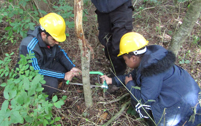 learning-outside-the-classroom-sawing-trees