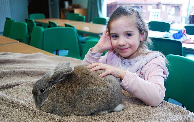 outdoor-education-activities-brown-rabbit
