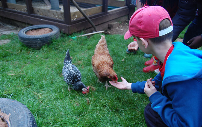 outdoor-education-activities-feeding-chickens