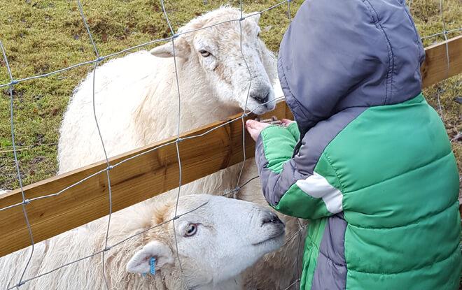 outdoor-education-activities-feeding-sheep