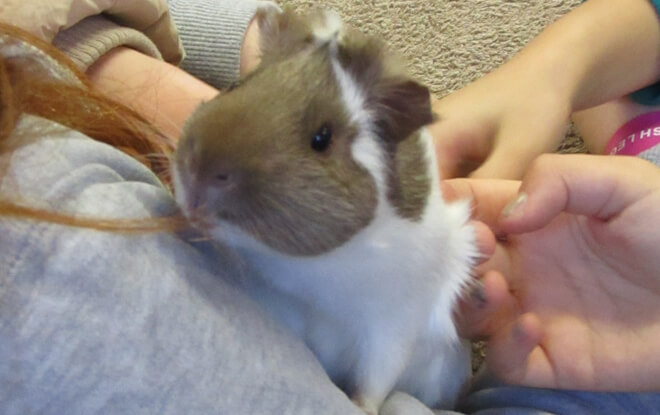 outdoor-education-activities-guinea-pig