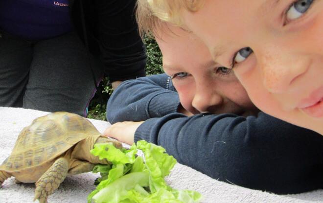 outdoor-education-activities-tortoise-feeding