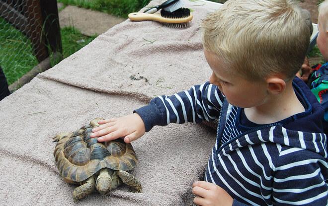 outdoor-education-activities-tortoise